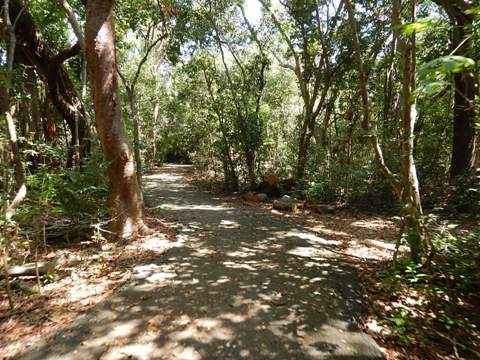Old Cutler Trail
