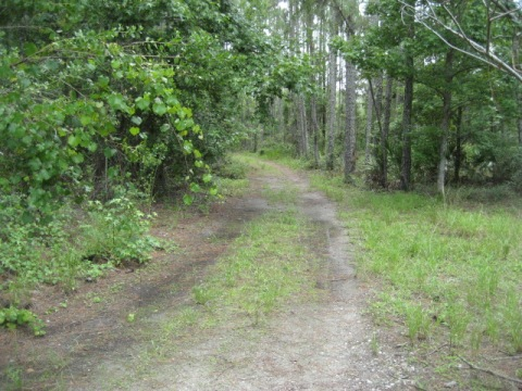 Florida Bike Trails, Old Fort King Road