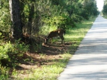 Van Fleet State Trail, wildlife